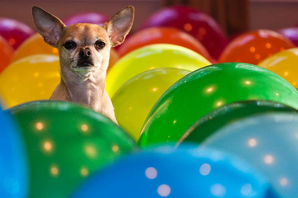 By wsilver (Flickr: Balloons huey) [CC BY 2.0], via Wikimedia Commons